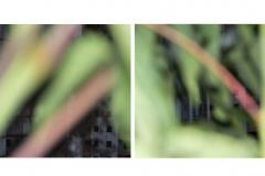 photo_2017-02-18_11-30-58