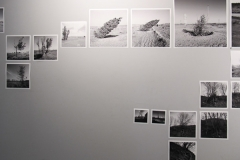 mehran-moghimi-iranshahr-gallery-27